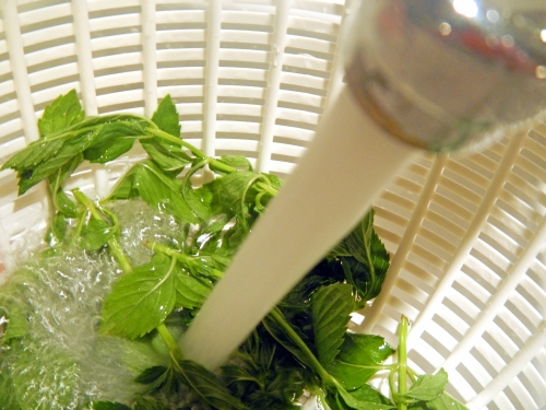 Wash herbs under running water