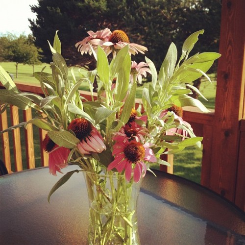 sage and coneflowers