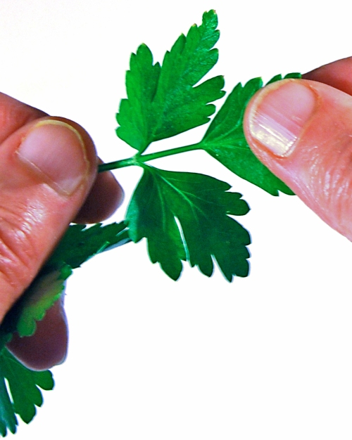 removing-parsley-leaf-new-skin-4