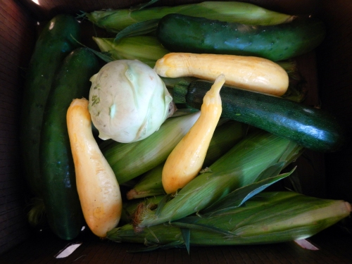 Community Supported Agriculture Box with cabbage, zucchini, corn, cucumbers and kohnrabi