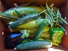 Corn, eggplant, green beans, green pepper, cucumber Community Supported Agriculture boox