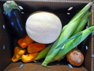 Community Supported Agriculture box with an eggplant, sweet corn, sweet onion, habanero peppers and a cantaloupe.