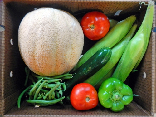 CSA box from Pekarek Produce